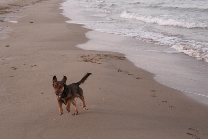 max von amumot am strand in denia