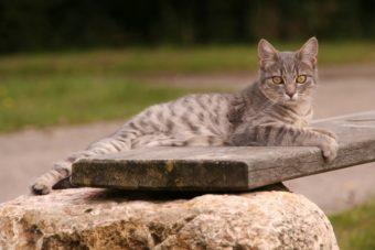 Katze im Wohnmobil