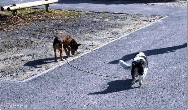 Max und LIssy gehen spazieren